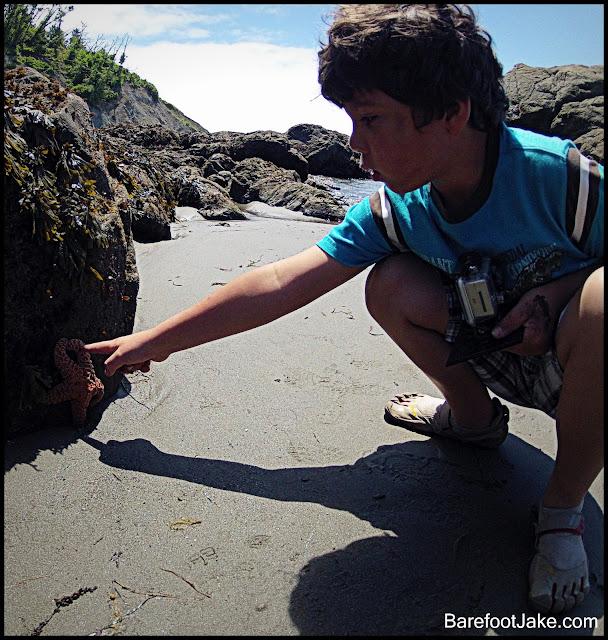 kid explore tidepool