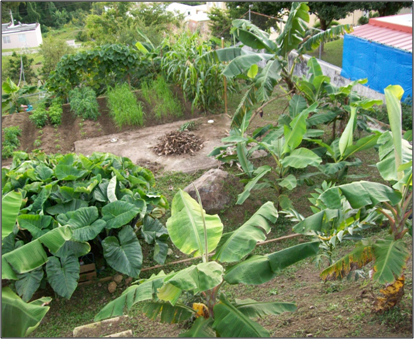 Informaciones agronomicas agricultura urbana cosecha lo - Como cultivar un huerto ...