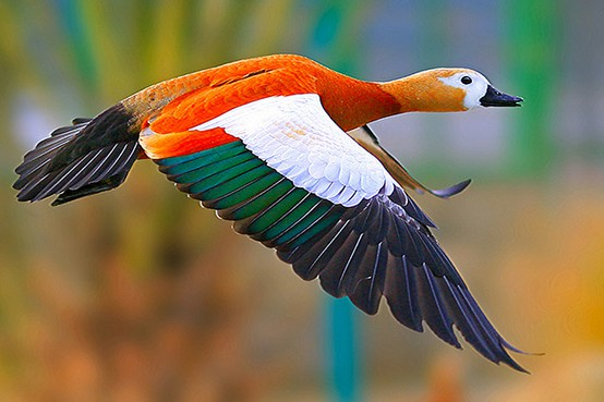 Beauty Of Wildlife Awesome Collection Of World Best Cage