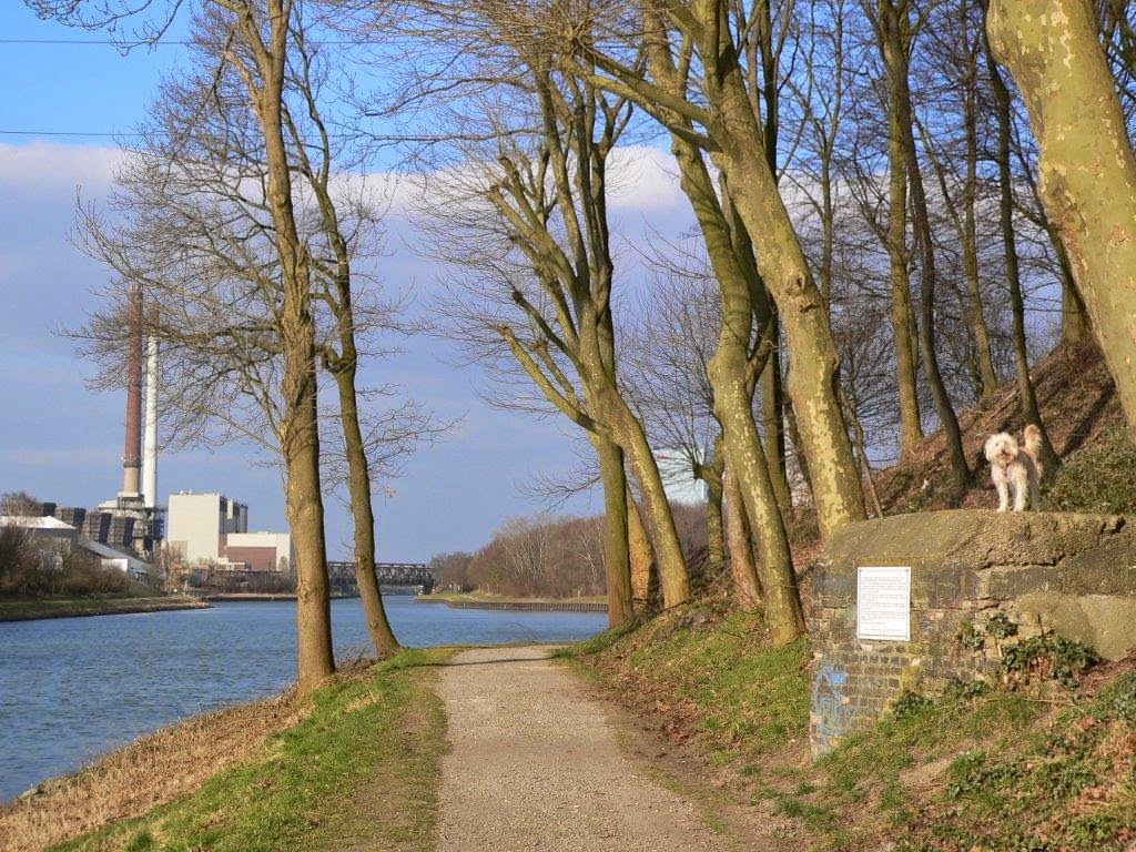 Kanal Dortmund-Ems-Kanal Frühling Ruhrpott Ruhrgebiet