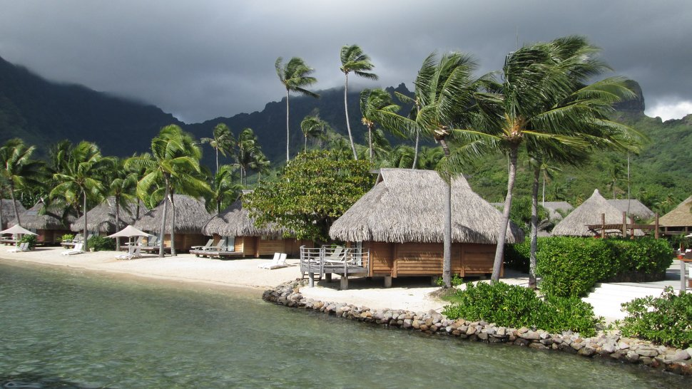 Bungalows et cocotiers au Moorea Pearl Resort & Spa