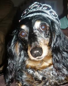 Darby, my first born :)
