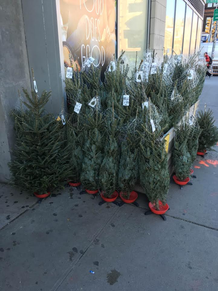 as far as we know lime tree is first to market with tree sales this holiday season though we did spot some smaller models outside the whole foods - Christmas Tree Market