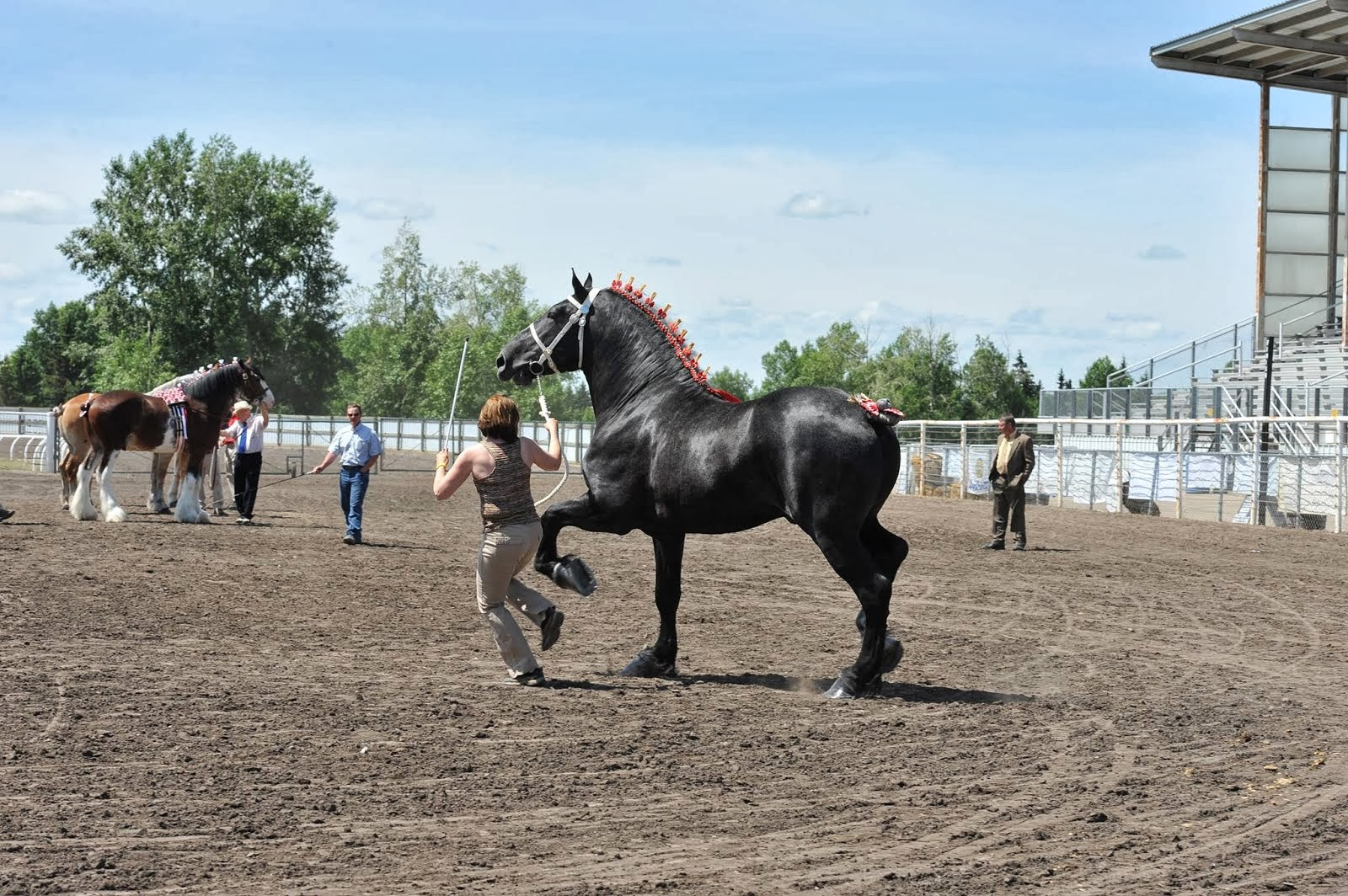 Eaglesfield Brigadier - Central Alberta Draft Horse Classic (3 Yr Old)