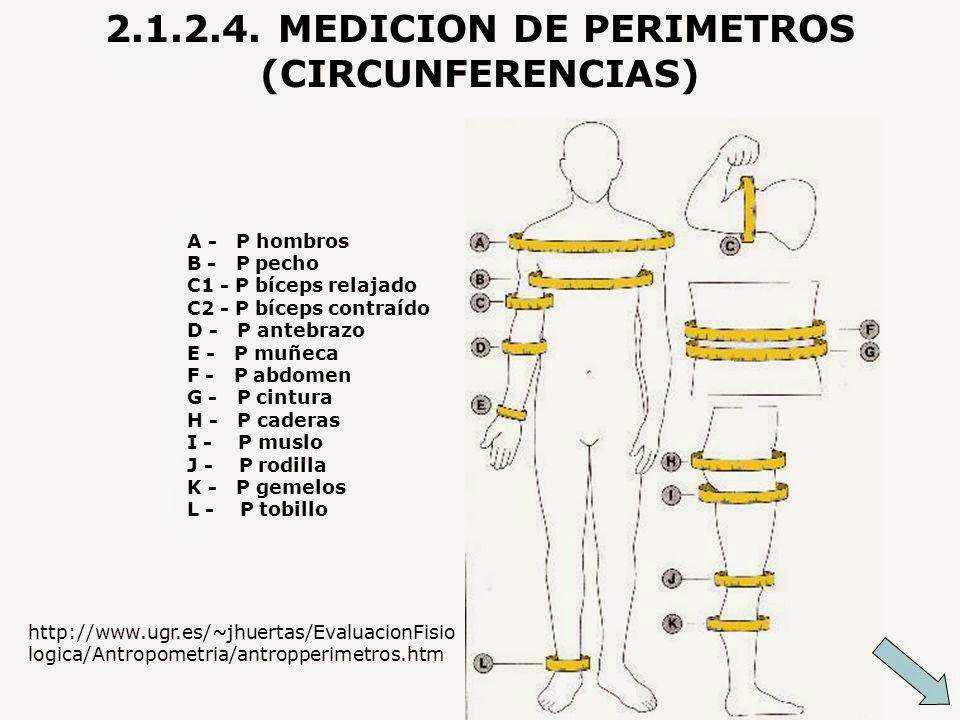Las medidas antropom tricas el culturismo como tomar tus for Medidas antropometricas del cuerpo humano
