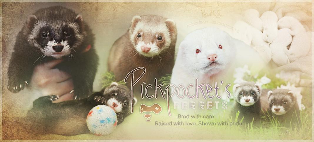 Pickpocket's Ferrets