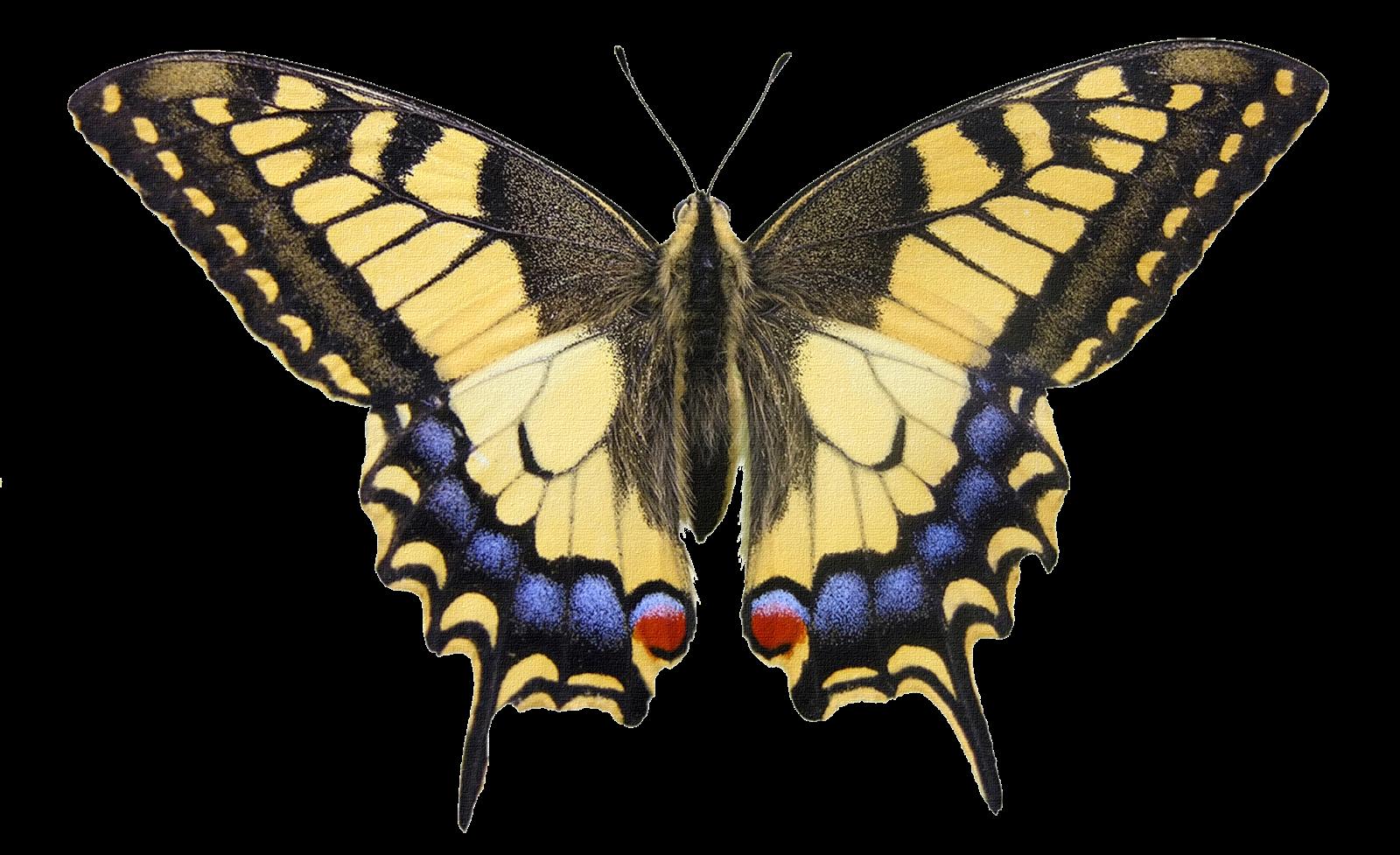 rosavecina.net: mariposas png ,,,,