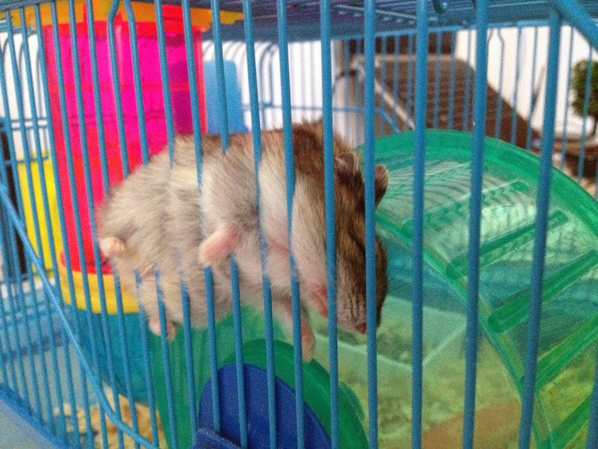 Funny animals of the week - 21 February 2014 (40 pics), hamster sleeps in uncomfortable place