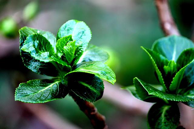 planta - folhas verdes e brotos