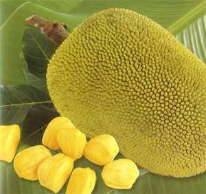 manfaat buah nangka heboh