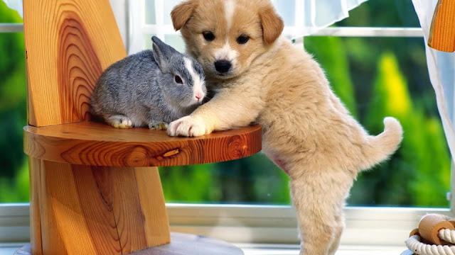 Bunny And Dog Puppies Desktop Wallpaper