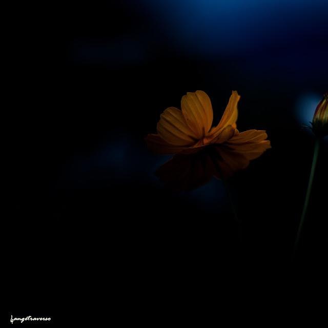 Nature, flore de France, Haute-Savoie