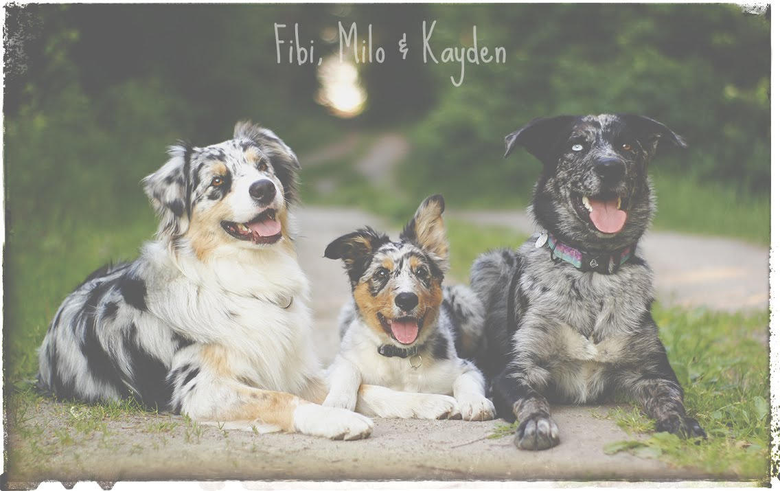 Fibi, Milo & Kayden