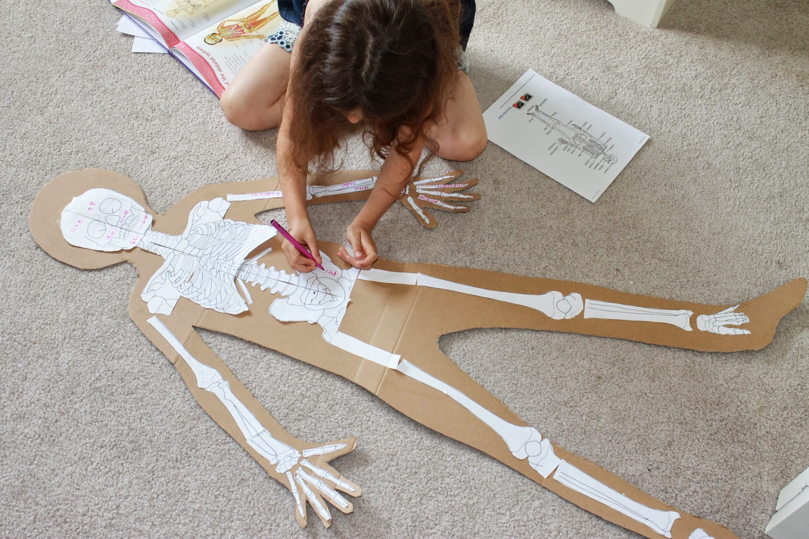 You Want To Learn About What Human Anatomy The Skeletal System