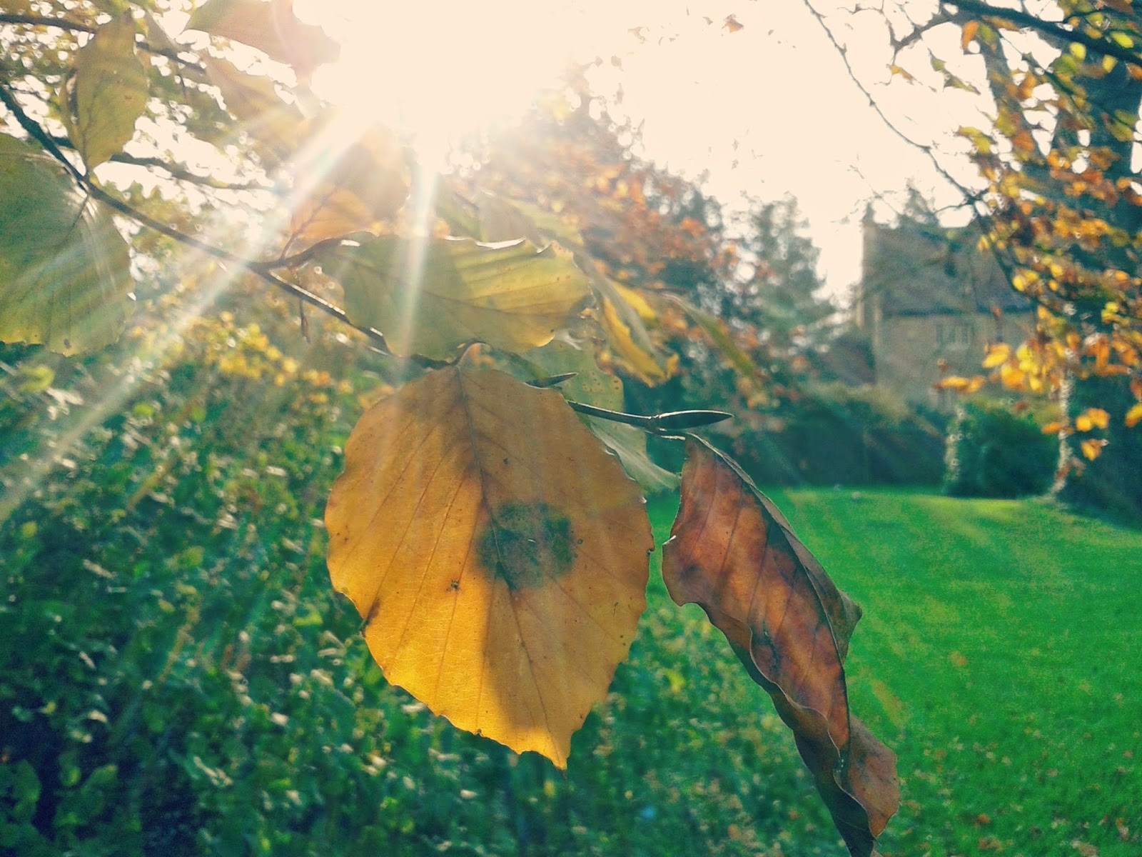 Project 365 day 320 - Autumn at Lacock // 76sunflowers