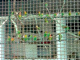 lovebird aviary kankaria zoo
