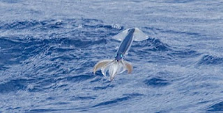 FLYING+SQUID