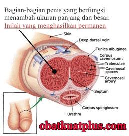 Rahasia Memperbesar dan Memperpanjang Penis