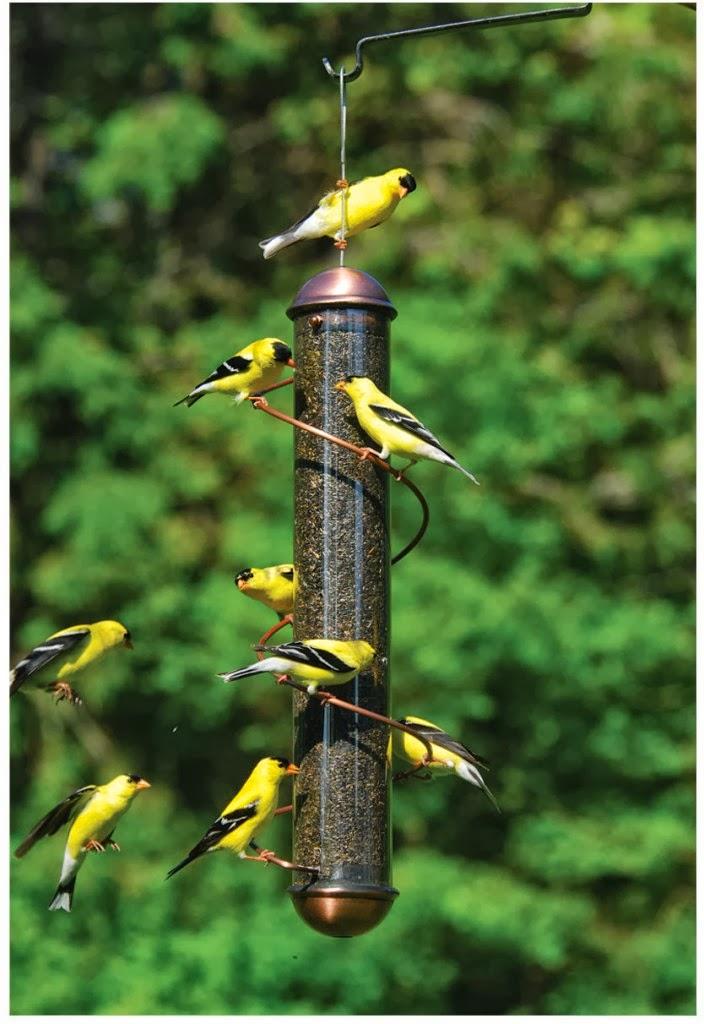Juntando s maras como atraer aves a tu jardin - Fuente para pajaros ...
