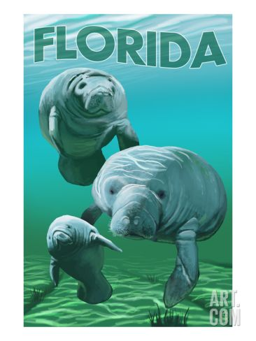 Florida Manatee Art