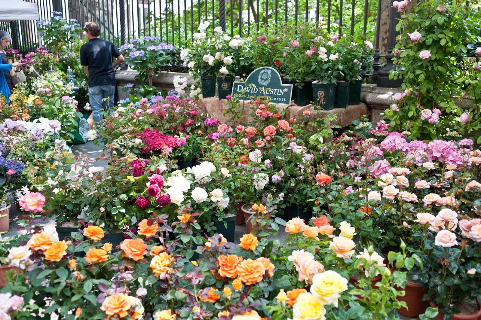 Metti un centro storico che diventa un giardino...