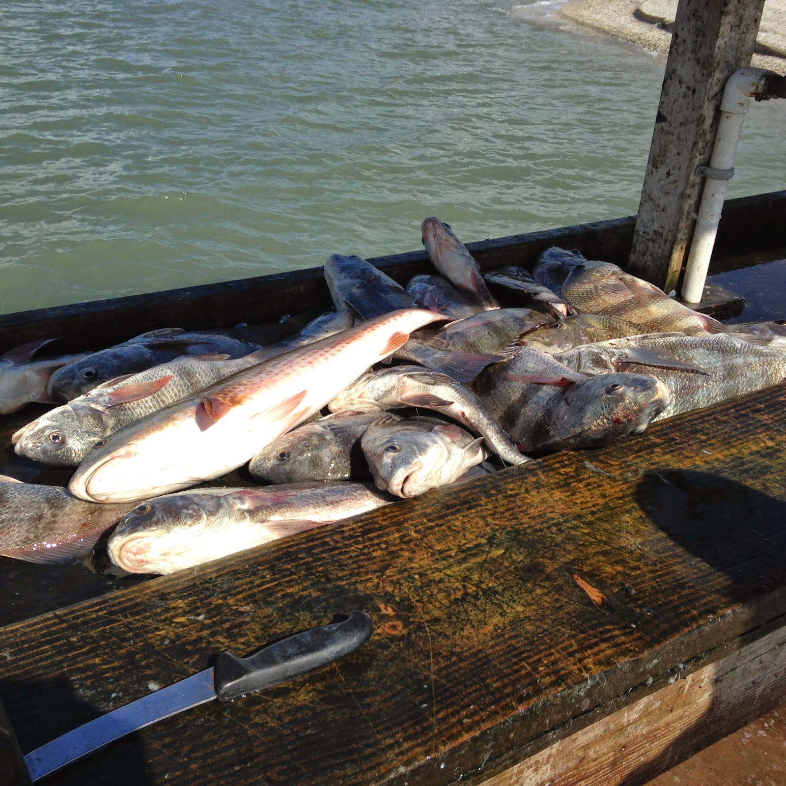 Ron 39 s rockport fishing reports pile of fish for Rockport texas fishing report