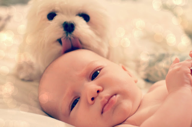dog kissing baby photography photos cute pictures