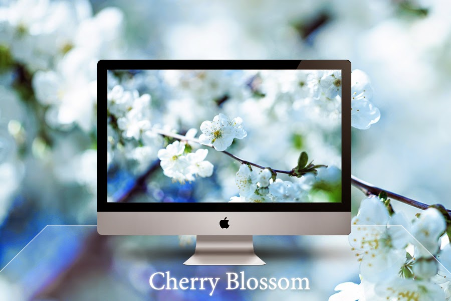 Cherry Blossom Free Picture