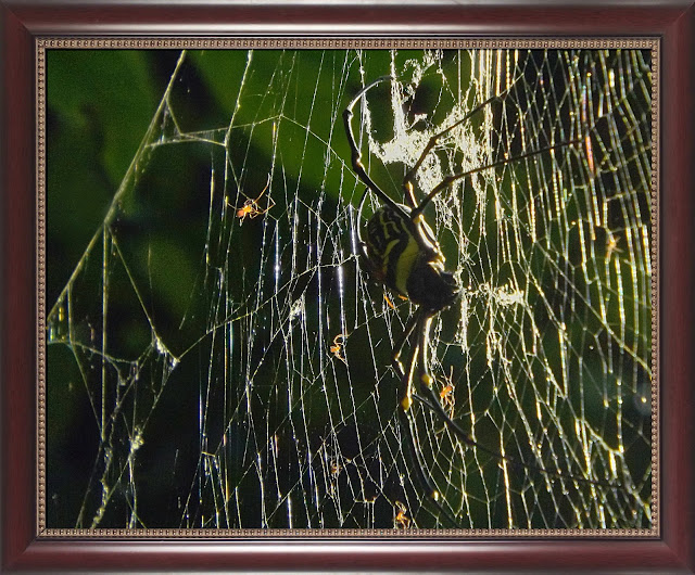 spiders web, mother earth, rules