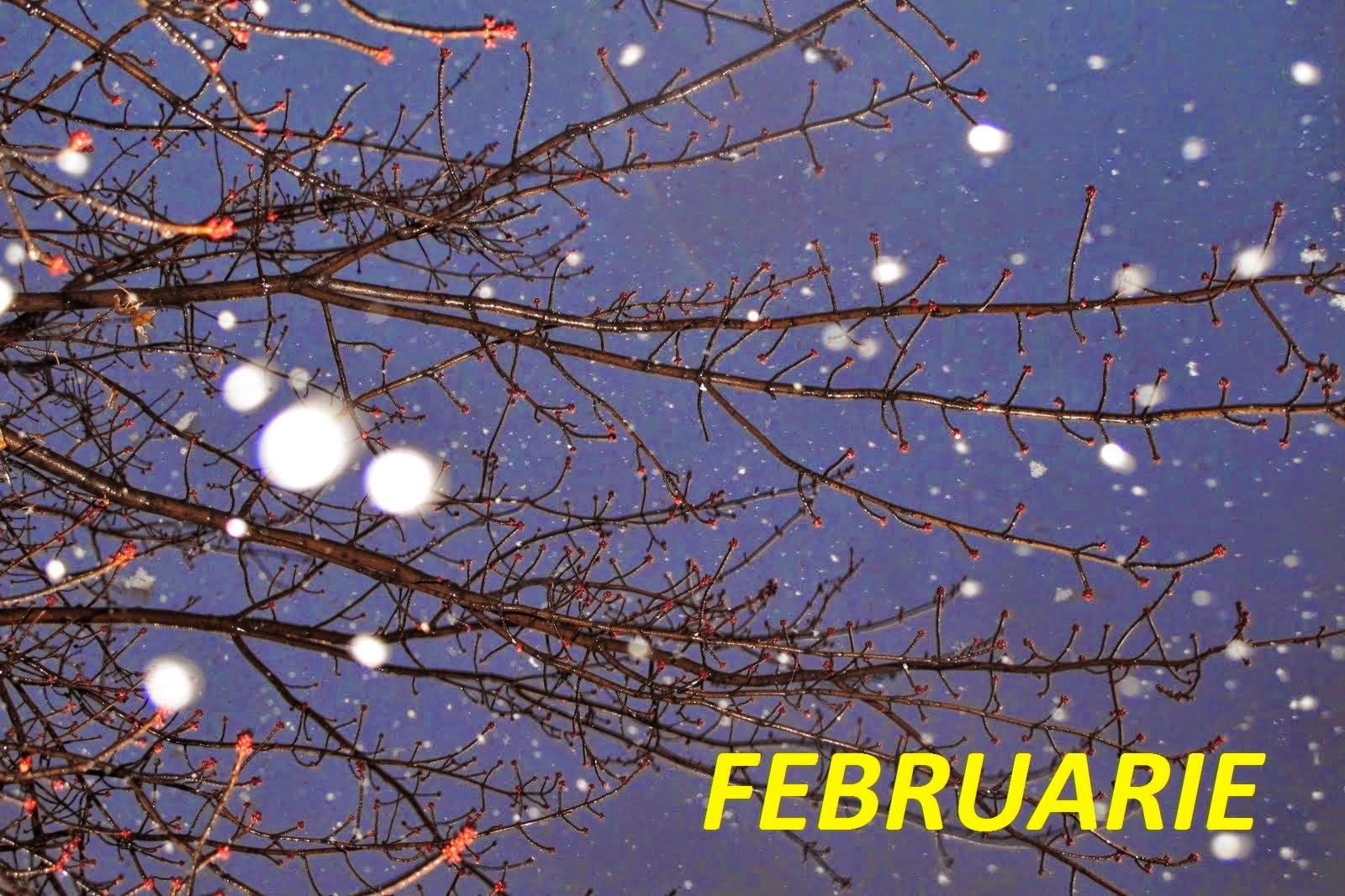 Horoscop februarie 2015 - Toate zodiile