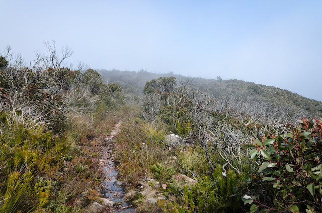 walking track from mount william
