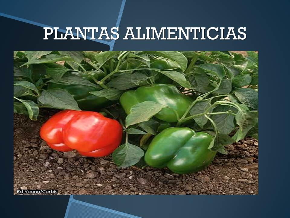 El rinconcito del sabio las plantas fuente de vida for Definicion de plantas ornamentales