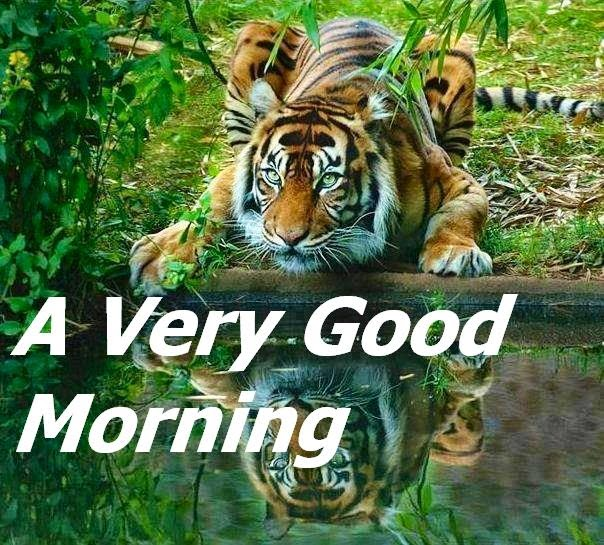 Latest Good Morning images For Whatsapp Good Morning Happy Monday Quotes