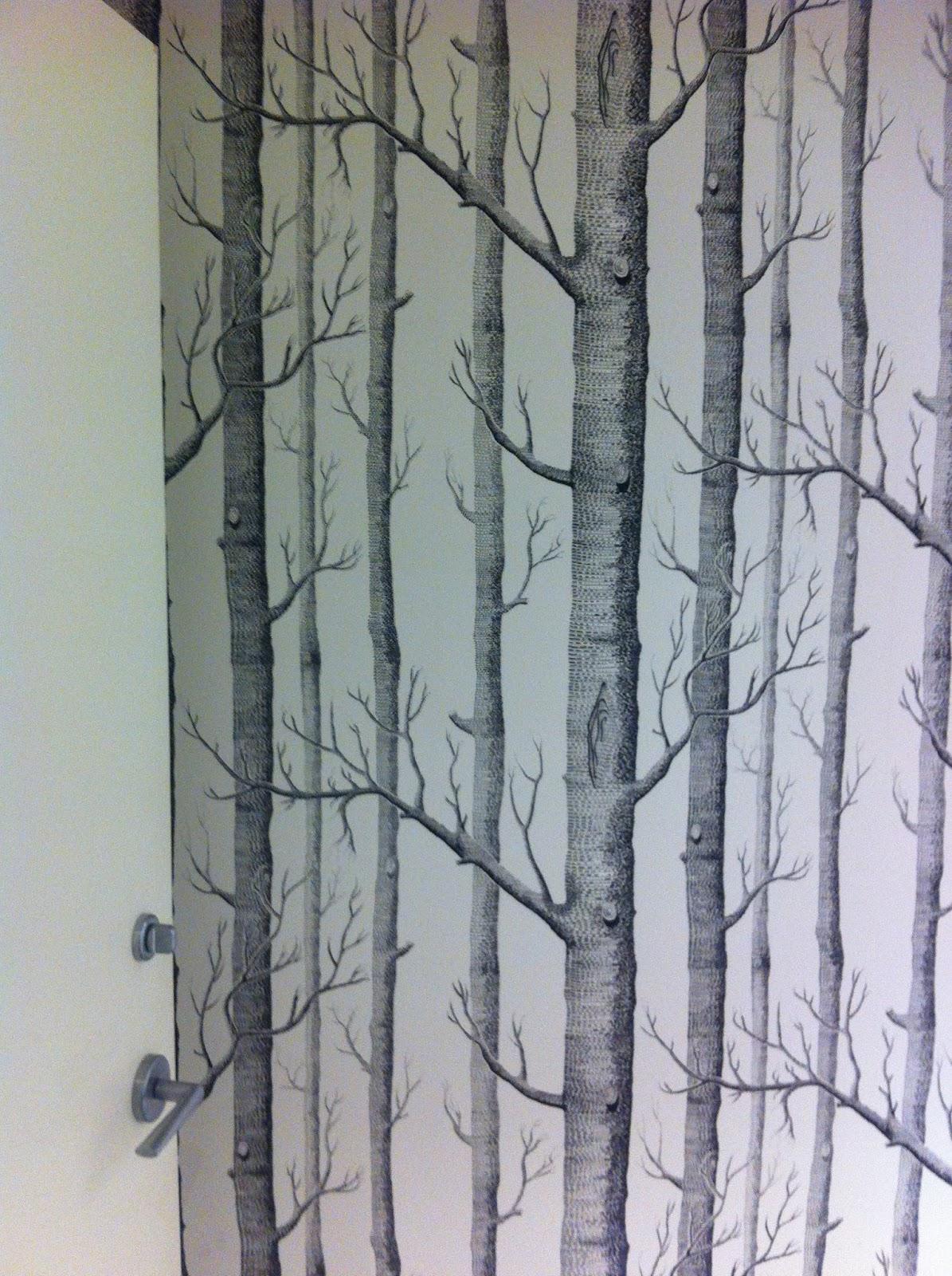 Bouleau noir et blanc Papiers peints • PIXERS