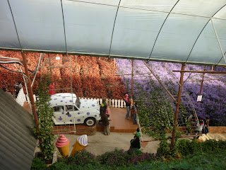 lavender garden, cameron highlands