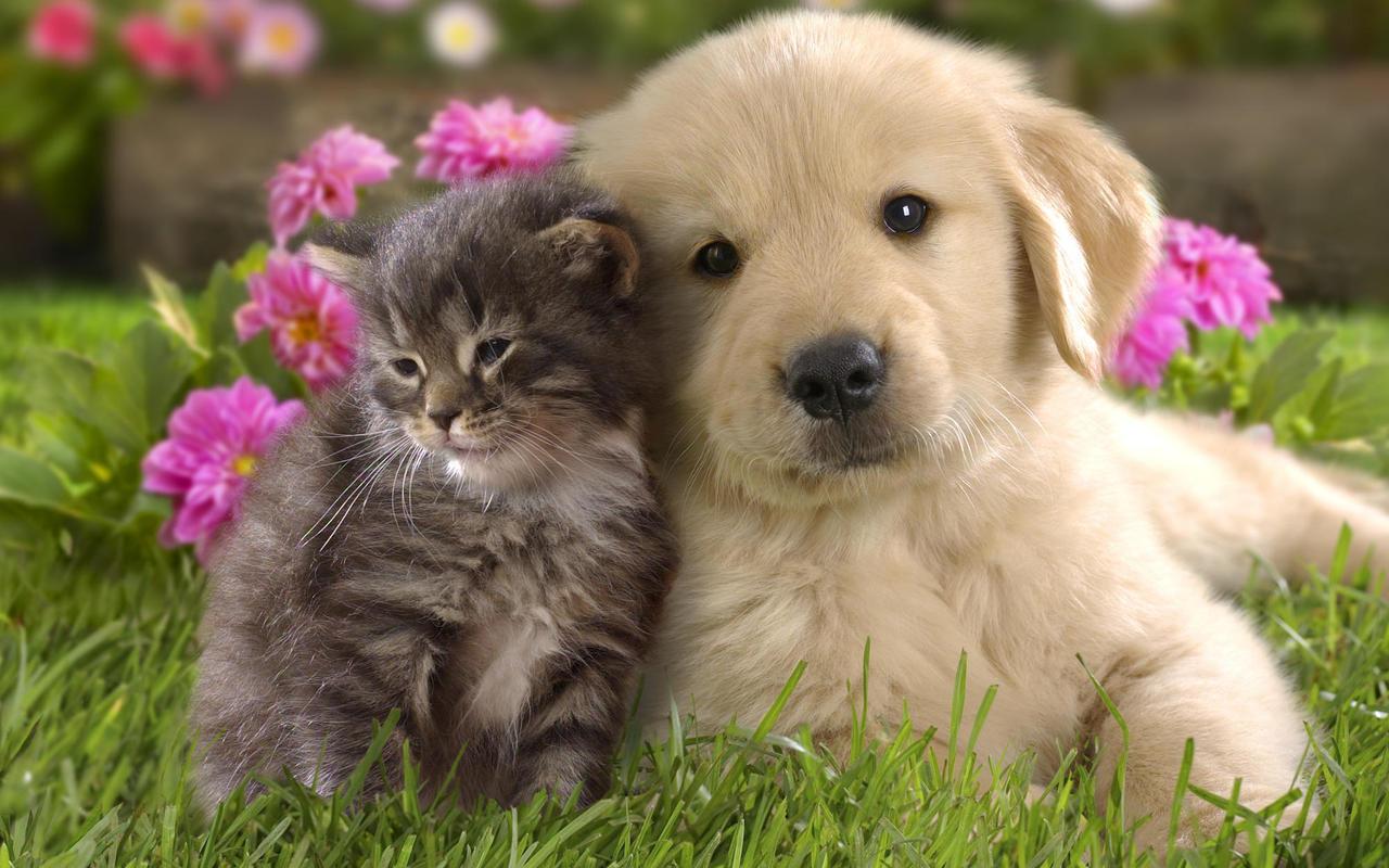 http://1.bp.blogspot.com/--J5XdR7oU3g/UEiPWd6JhNI/AAAAAAAAB4k/9MK3Zzr2q5M/s1600/dog-and-cat-wallpaper-teddybear---.jpg