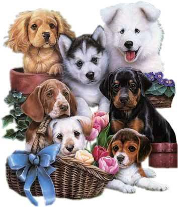imágenes tiernas de perritos