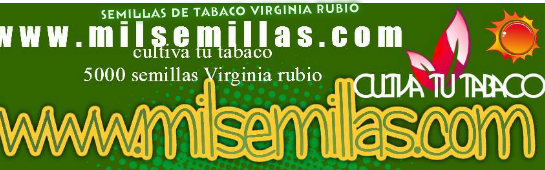 Semillas de tabaco Virginia  rubio  venta On-Line