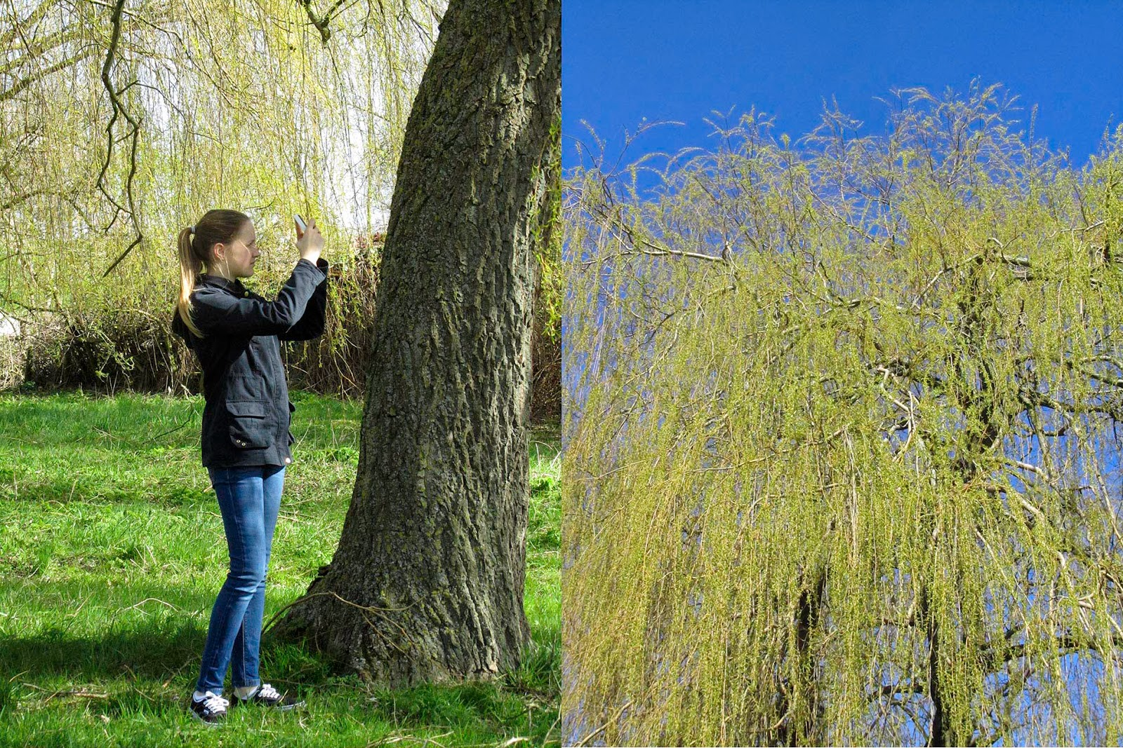 my niece Emily taking picture of this yellow tree