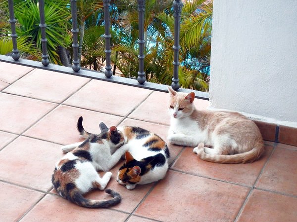 multi-colored cats bring luck