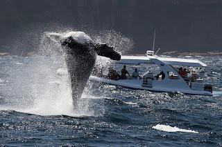 whale watch wild