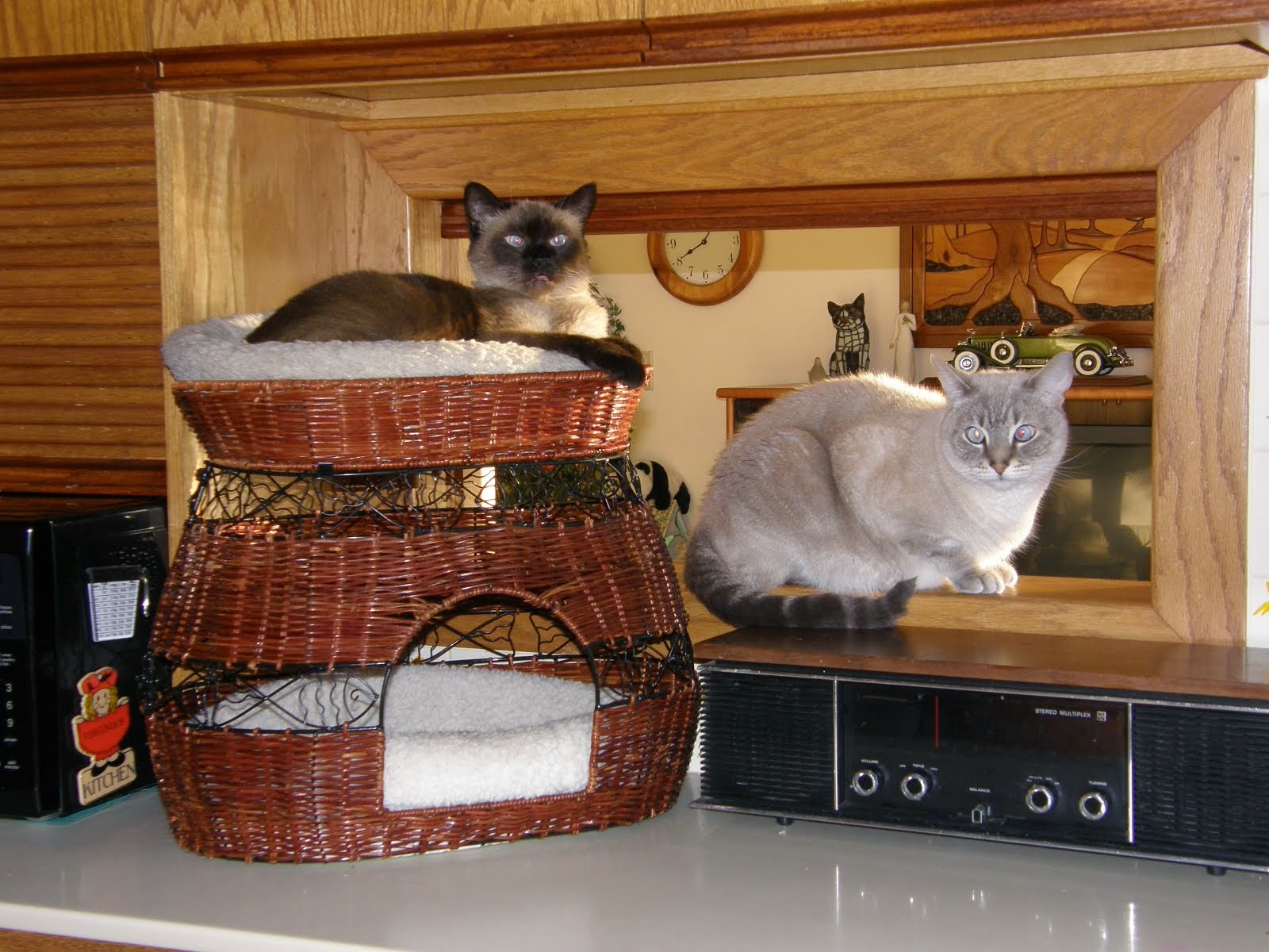 Sophie (left), Ginnie's cat