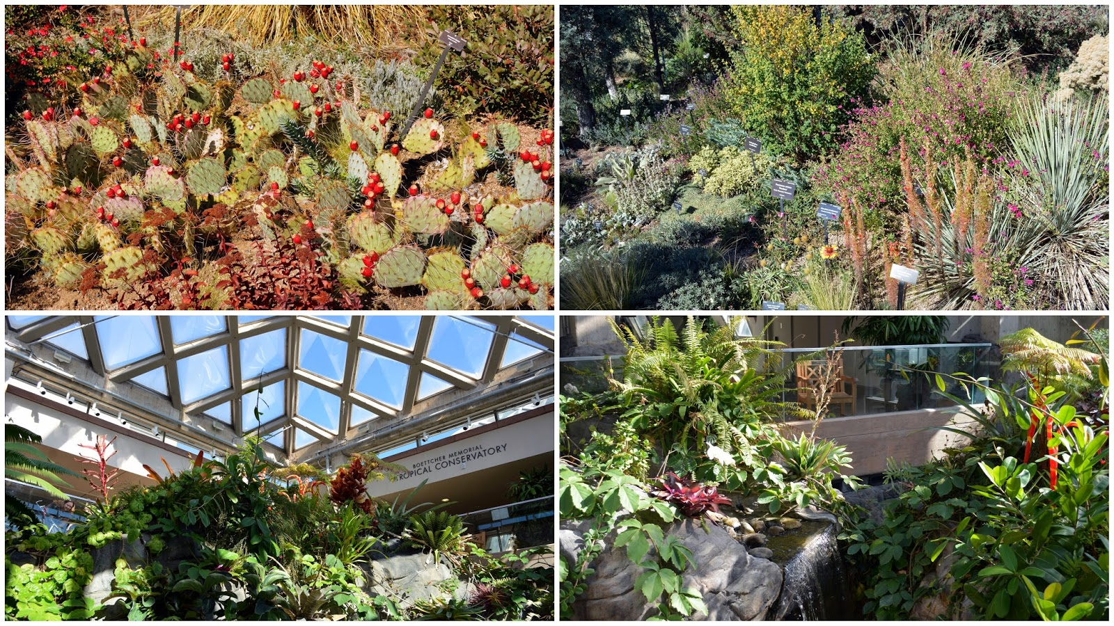 We Also Visited The Boettcher Memorial Tropical Conservatory Within The Denver  Botanical Garden, Where Cacti And Succulents Were Displayed Outside, ...