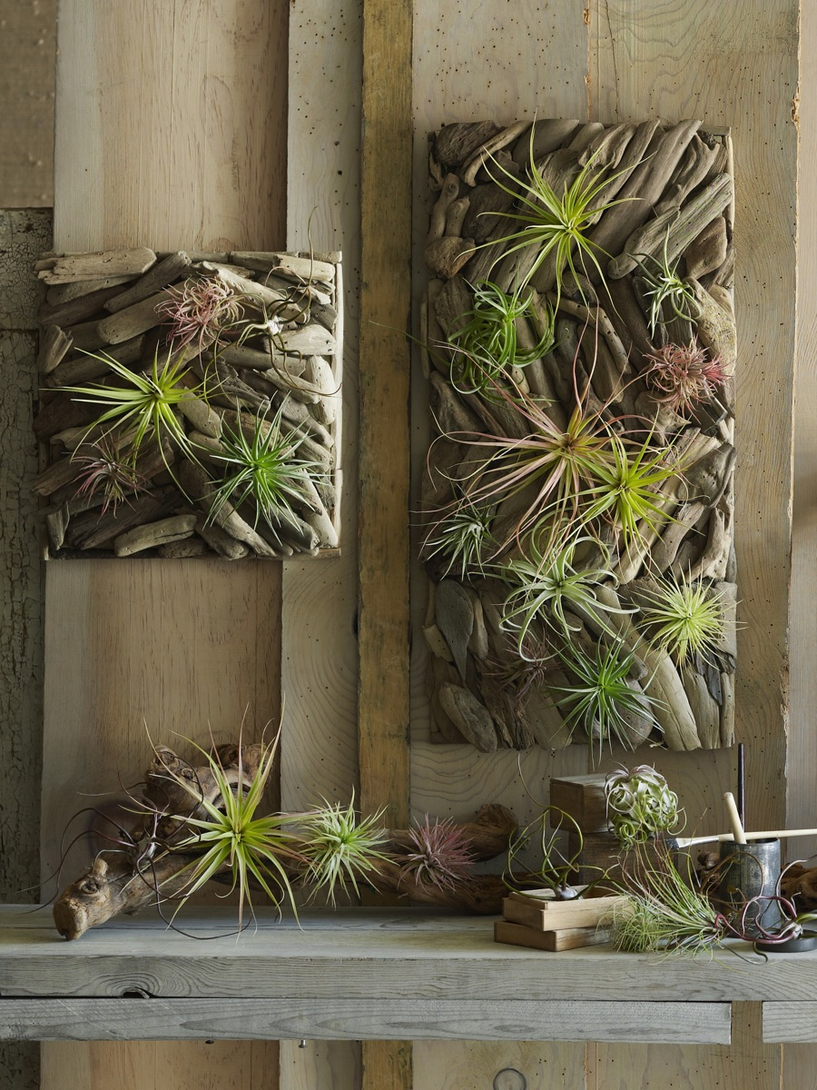Still life gallery hanging terrariums pumice planters for Air plant art