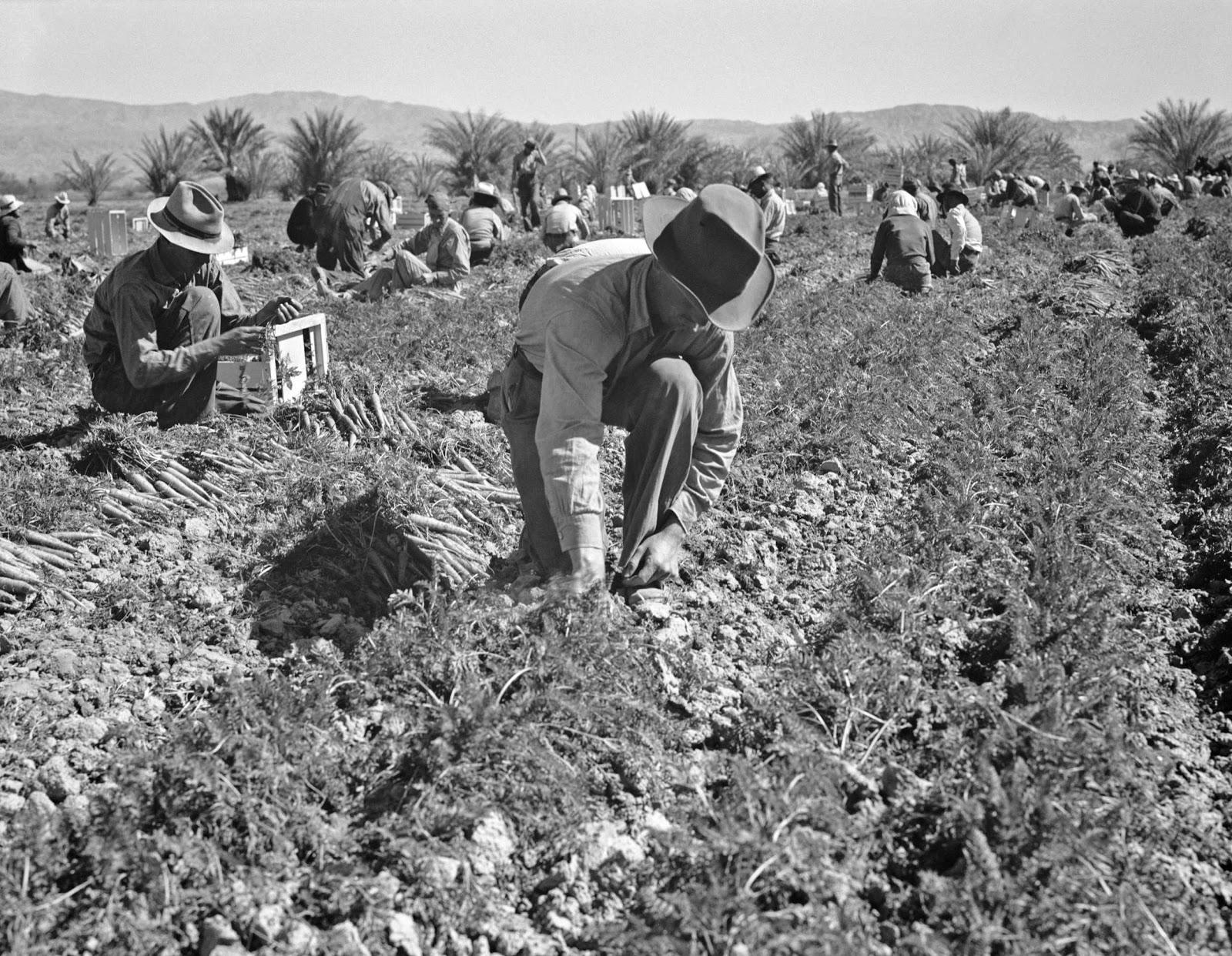 History In Photos Dorothea Lange