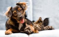 poemas+dia+animal+mascota+perro+gato