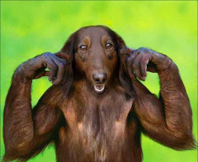Σκυμπατζής