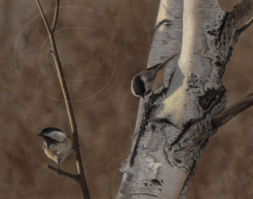 Black Capped Chickadee Painting in Pastel by Colette Theriault