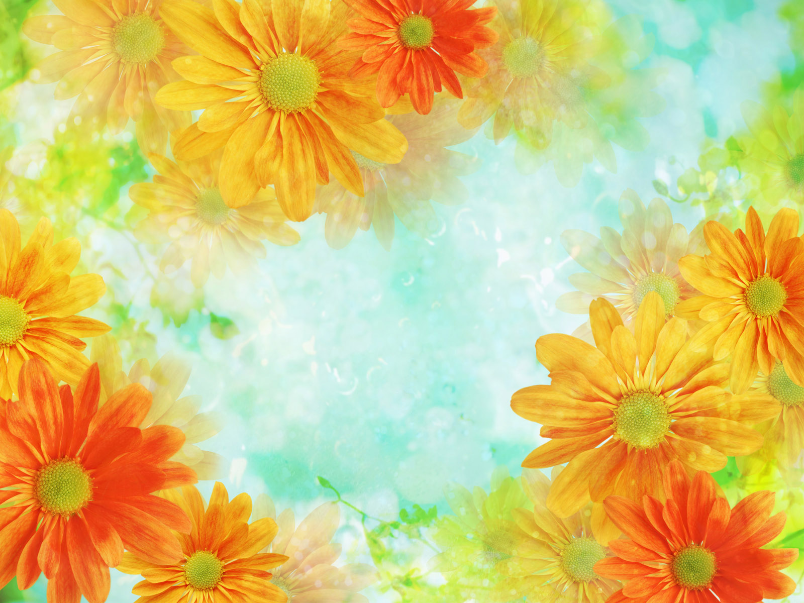 Stella faulkner daisy background - Floral background ...