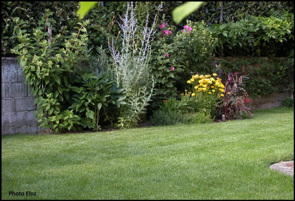 Un giardino di perenni in ticino giugno 2011 for Aiuole perenni